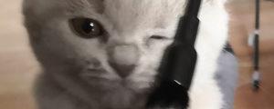 Forum - Katze im Wohnmobil